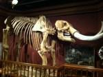 Big mastodon