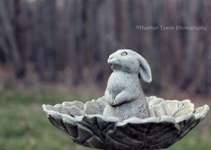 BunnyBath