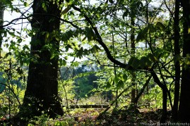 TheEdgeOfTheForest