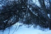 SnowyFort