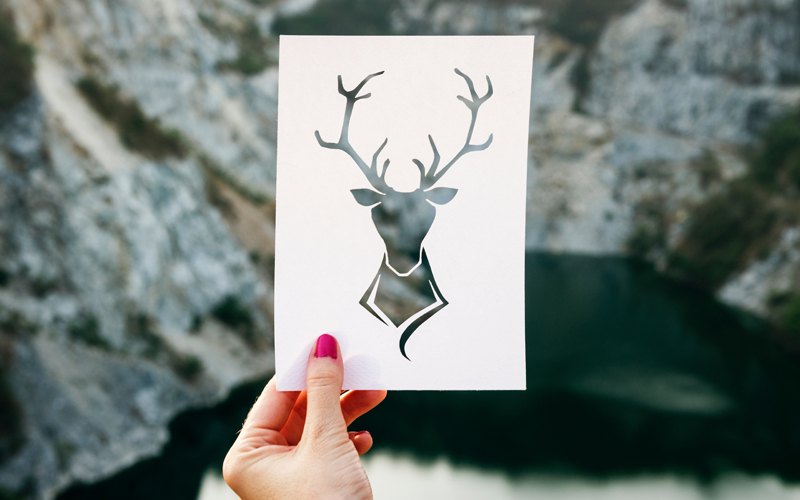 image of a deer on a paper