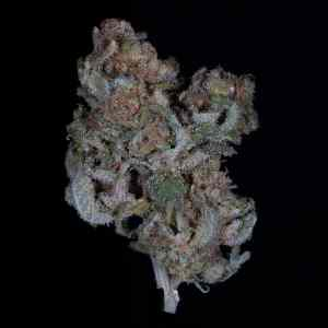 Buy Cannatonic CBD Kush| Buy Cannatonic CBD Flower Strain| Buy Cannatonic CBD Marijuana Strain | Buy Cannatonic CBD Flower| Buy CBD Cannatonic Flower|