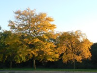 Autumn trees outside my home