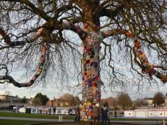Remembrance Tree in Stratford Basin