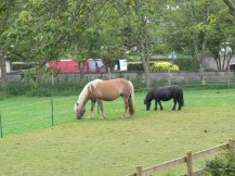 Mare and foal in the paddock behind our cottage