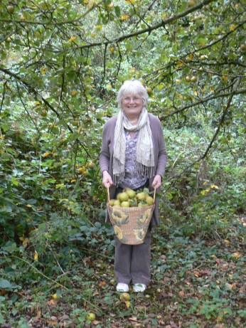 Me gathering apples at Willen