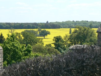 Rapeseed viewed from Warwick castle