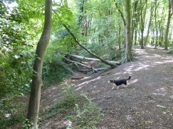 Benhall Woods 16