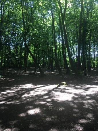 Benhall Woods 3