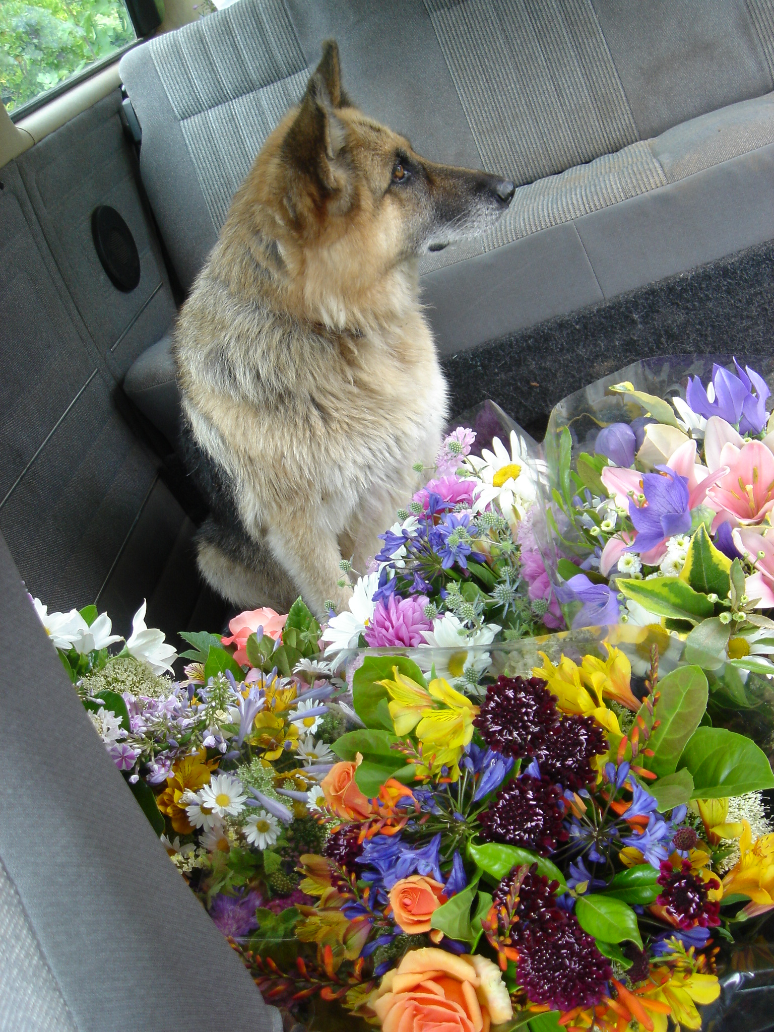 Cannot load flowers in the combi without Wolfie