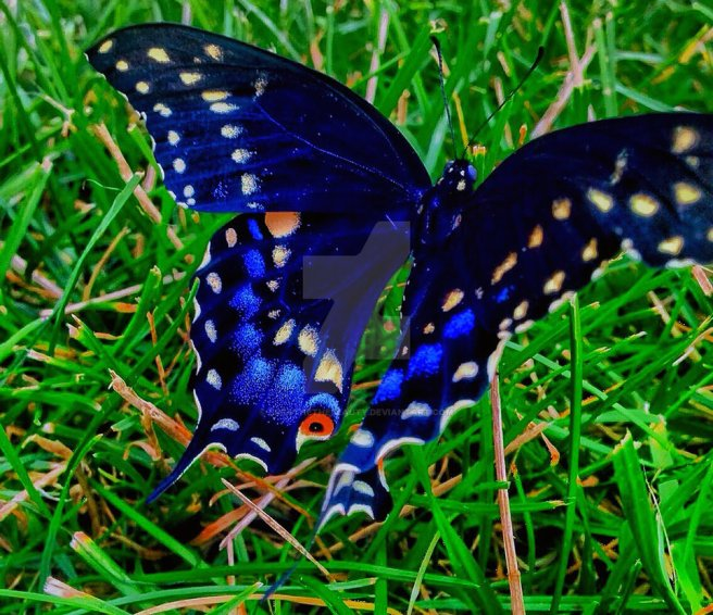 new_born_butterfly_by_breathethebeauty-da1ivda