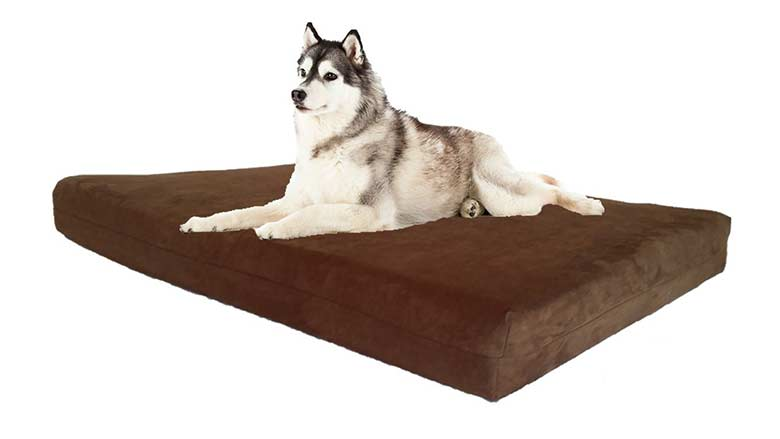 top 10 best large dog beds for sale