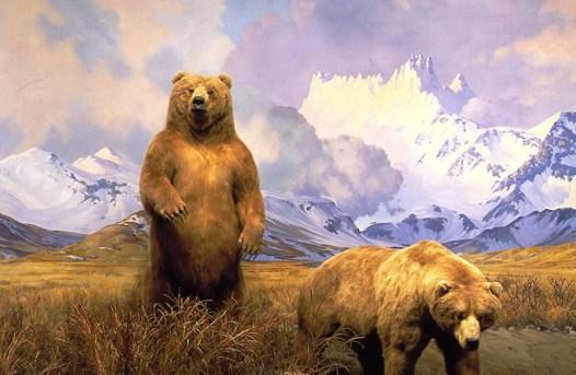 מוזיאון הטבע וההיסטוריה בניו יורק.jpg דובים