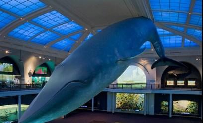 מוזיאון הטבע וההיסטוריה בניו יורק