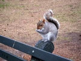 squirrel-508808_640