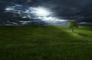 עץ בזריחה שקיעה