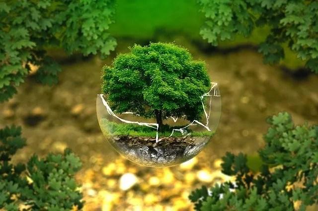 עץ ירוק בתוך זכוכית שבורה