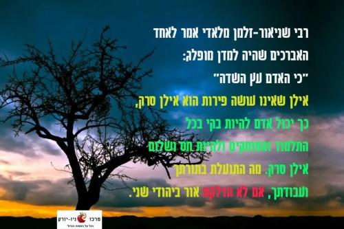 כי האדם עץ השדה - עץ סרק