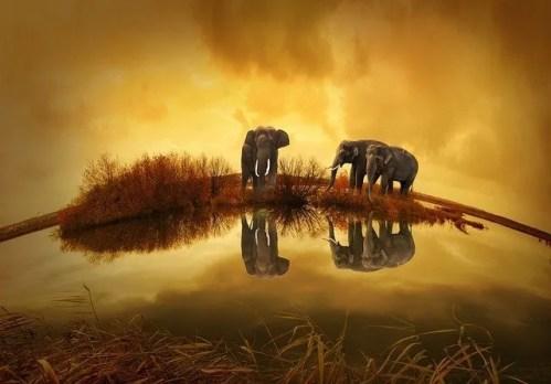 חברות פילים בתיאלנד