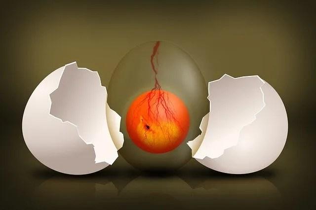 ביצה קמה לתחייה