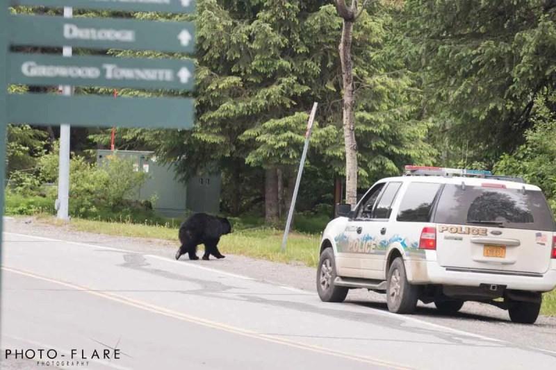 דובים שחורים באלסקה