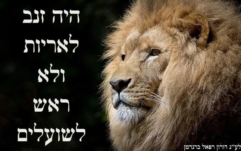 היה זנב לאריות ולא ראש לשועלים
