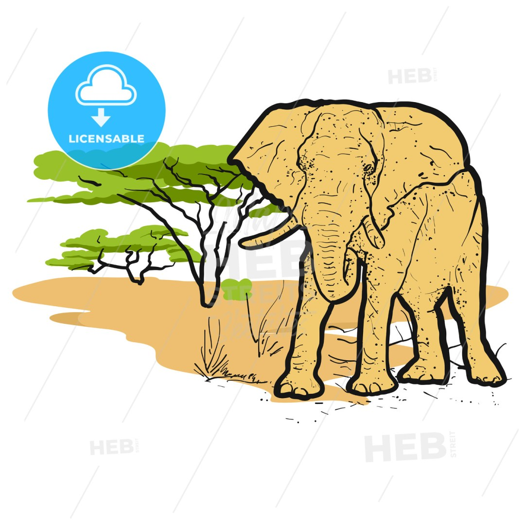 Elephant in savannah Colored Illustration