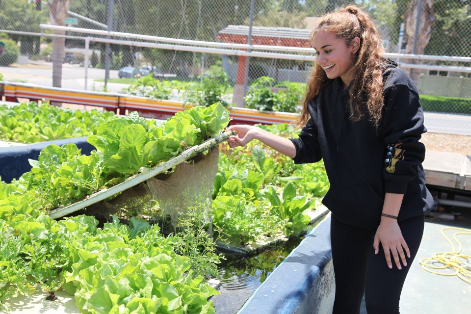 Alana Johnson, 18, lifts a bed of hydroponically grown lettuce at Abraxas Continuation High School in Poway, California. Last year, Johnson and her classmates in an all-girls' construction class engineered a network of pipes that channels fish poop from a pool of tilapia to the school garden.