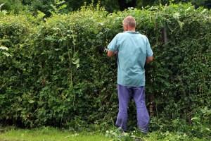 Heckenpflanzen-Recht