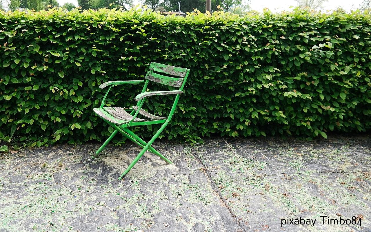 hecken pflanzen auswahl pflanzen pflegen rechtliches. Black Bedroom Furniture Sets. Home Design Ideas