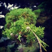 """""""Bosque de árboles solitarios, Galería"""" Fotosecuéntico – No. 12"""