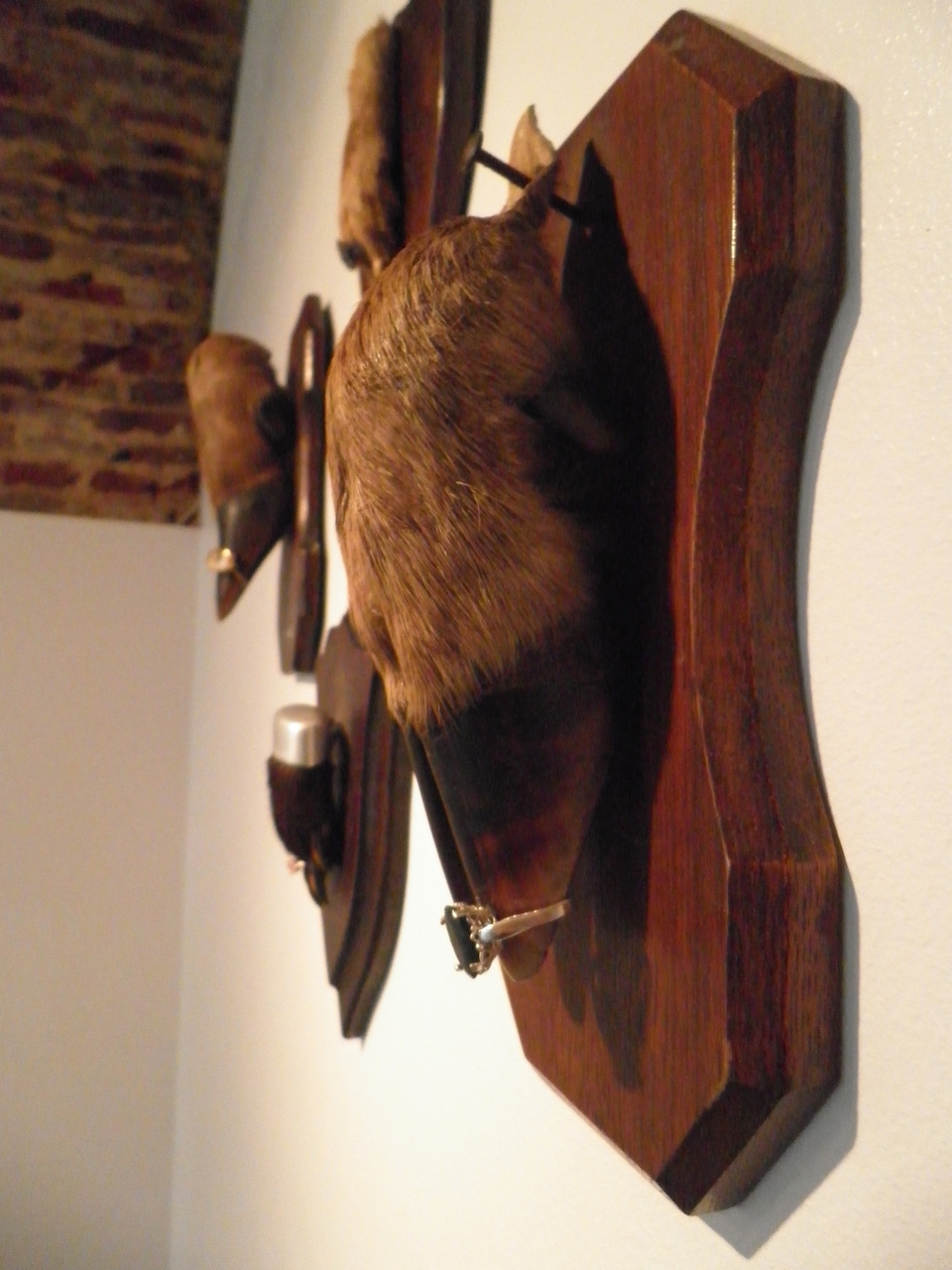 Galeria Articula, Lissabon, ring, hout, taxidermie