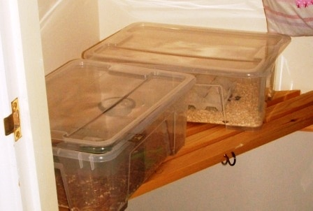 Mealworm Farm in Airing Cupboard
