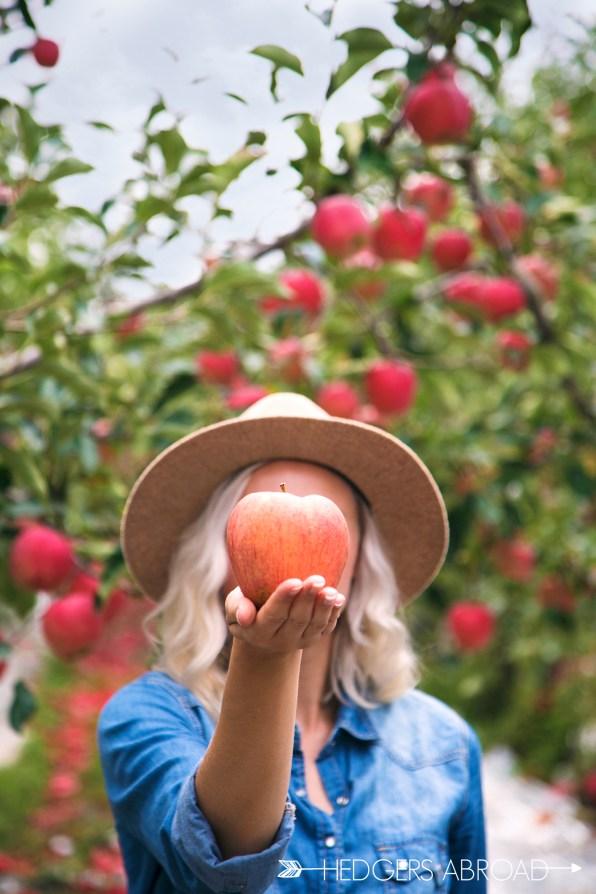 Korea Apple Orchard Photo Shoot