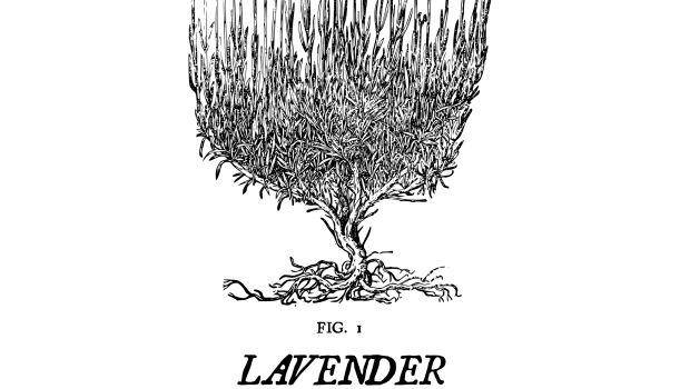 The Folklore Files: Lavender