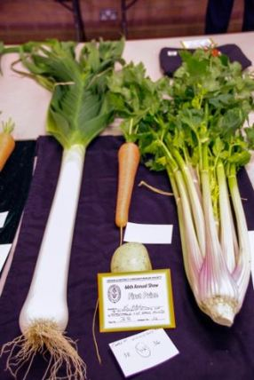 K Abel - 4 different kinds of vegetables 1 of each kind - Photo: Linda Hinchcliffe