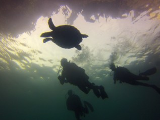 thailand beach koh phi phi scuba diving sea turtle