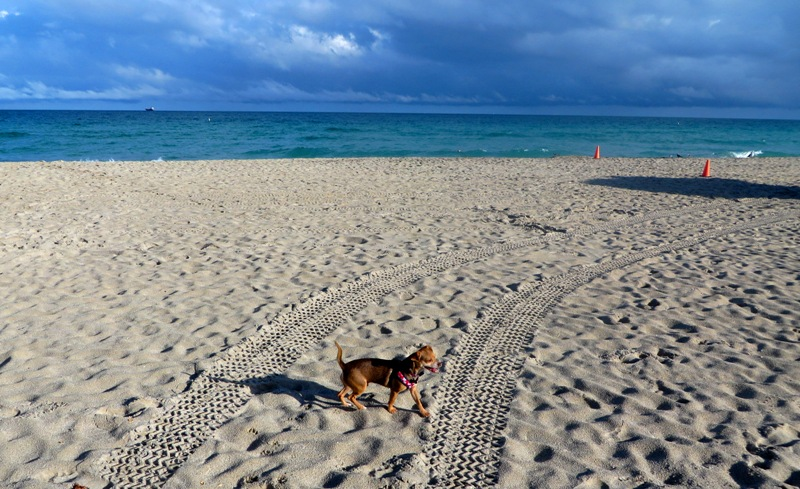 Pet Friendly Miami Vacation - SLS South Beach – beach