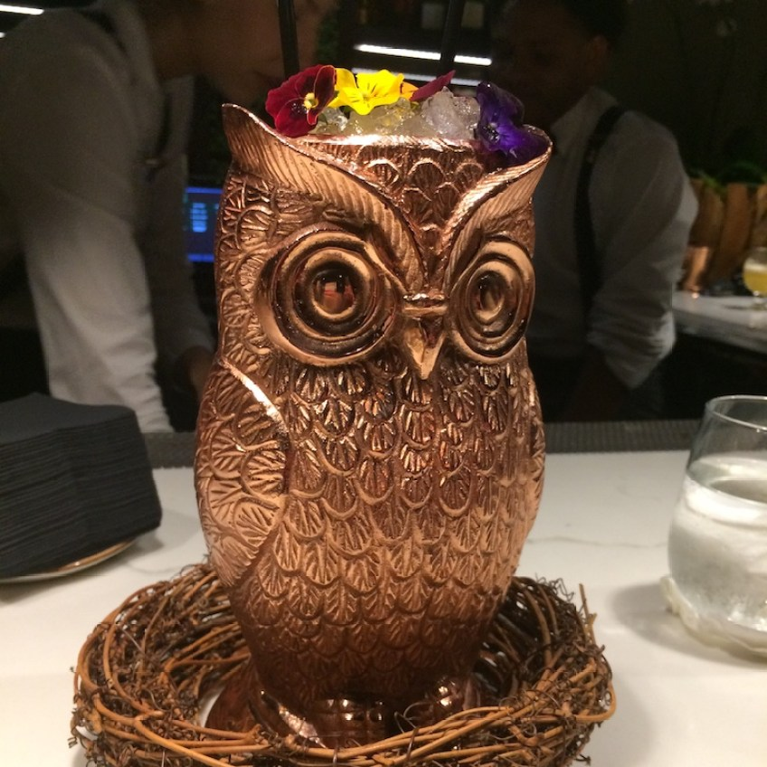Zucca Owl Cup