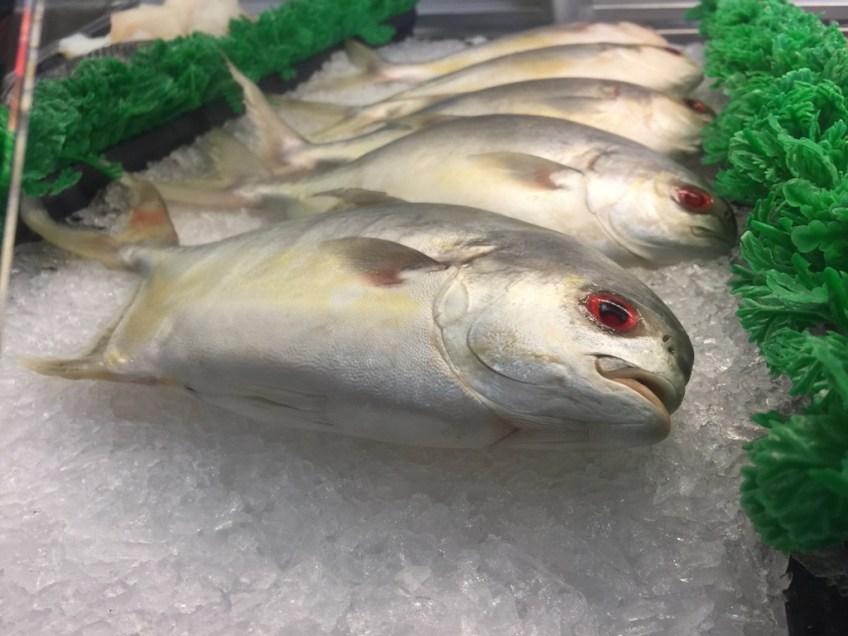 Captain Kidd's Fish 1