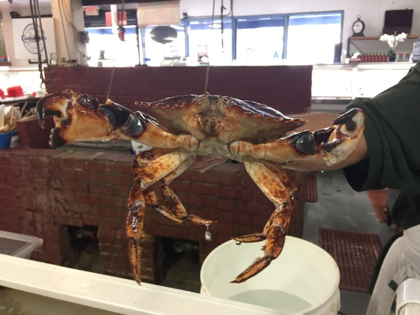 Captain Kidd's Live Crab