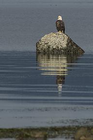 © Sandro Schmid, Foto Reise Kanadische Rockies