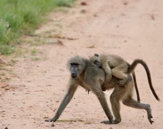 © Jennifer Lewis, Foto Reise Southern Africa