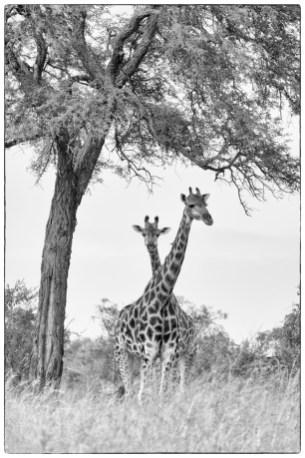 © Elsbeth Stalder, Foto Reise Südafrika