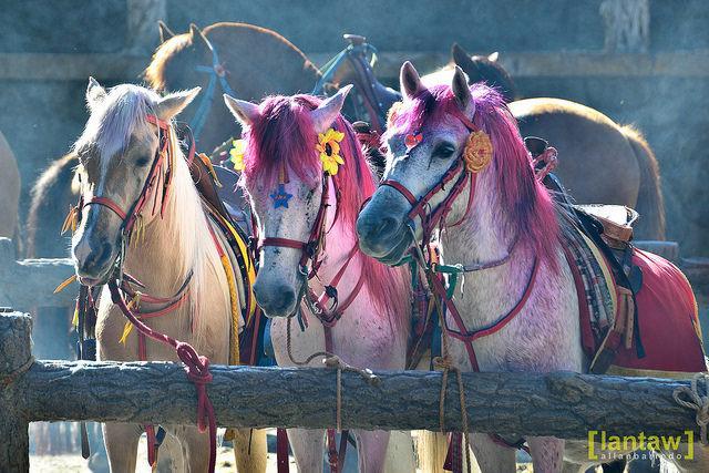 Festival chic horses