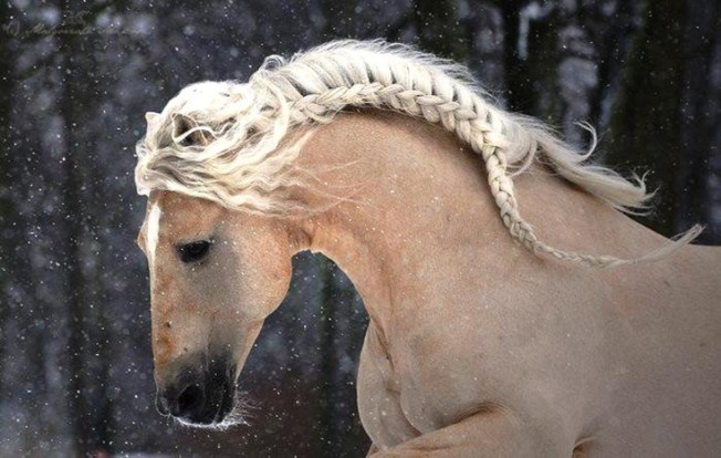 Horse with french braid mane