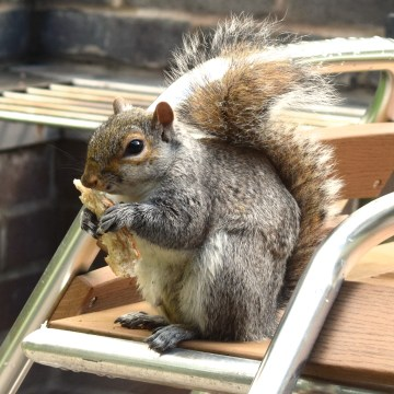 squirrel on the table at Center Parcs Elveden Forest