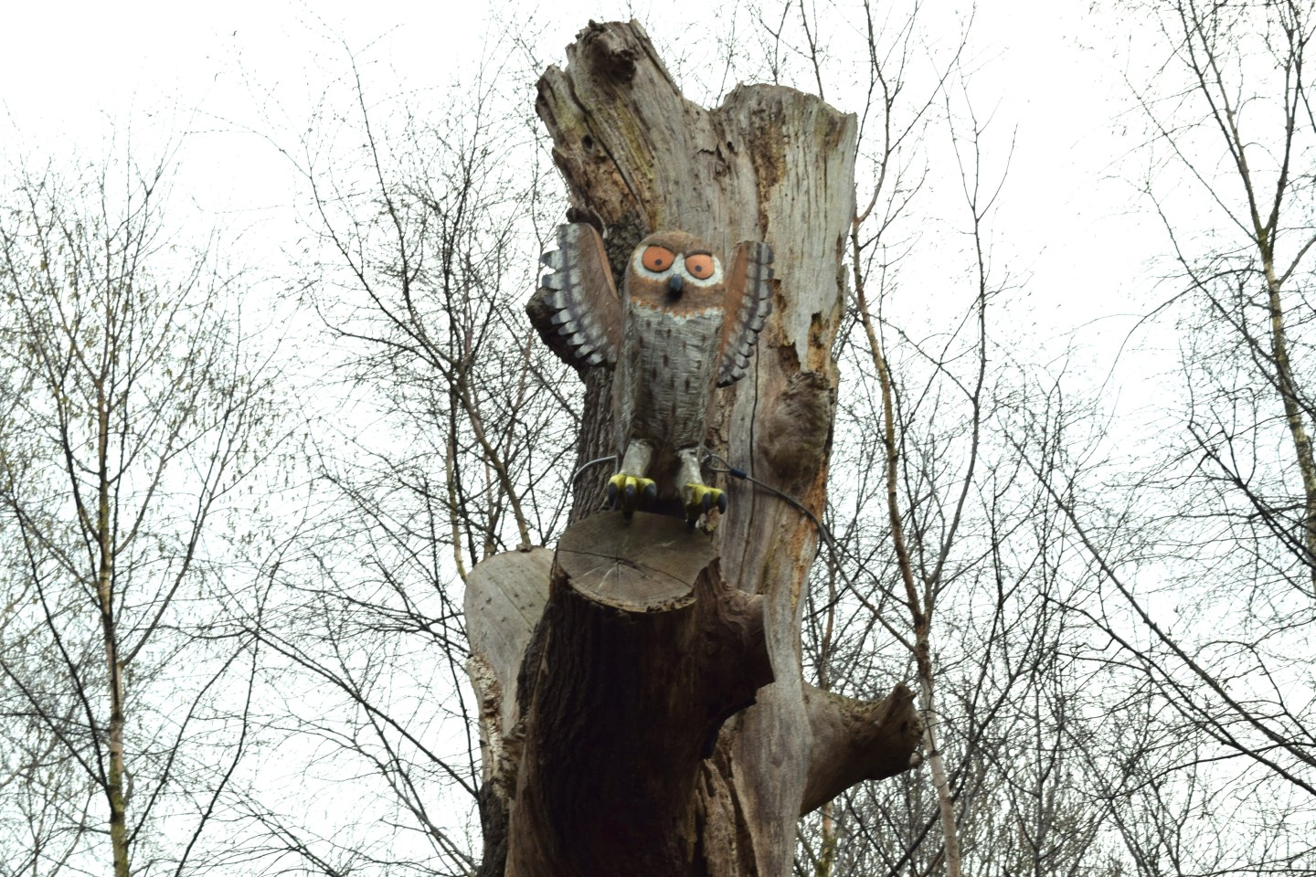 The Gruffalo Trail, Essex owl