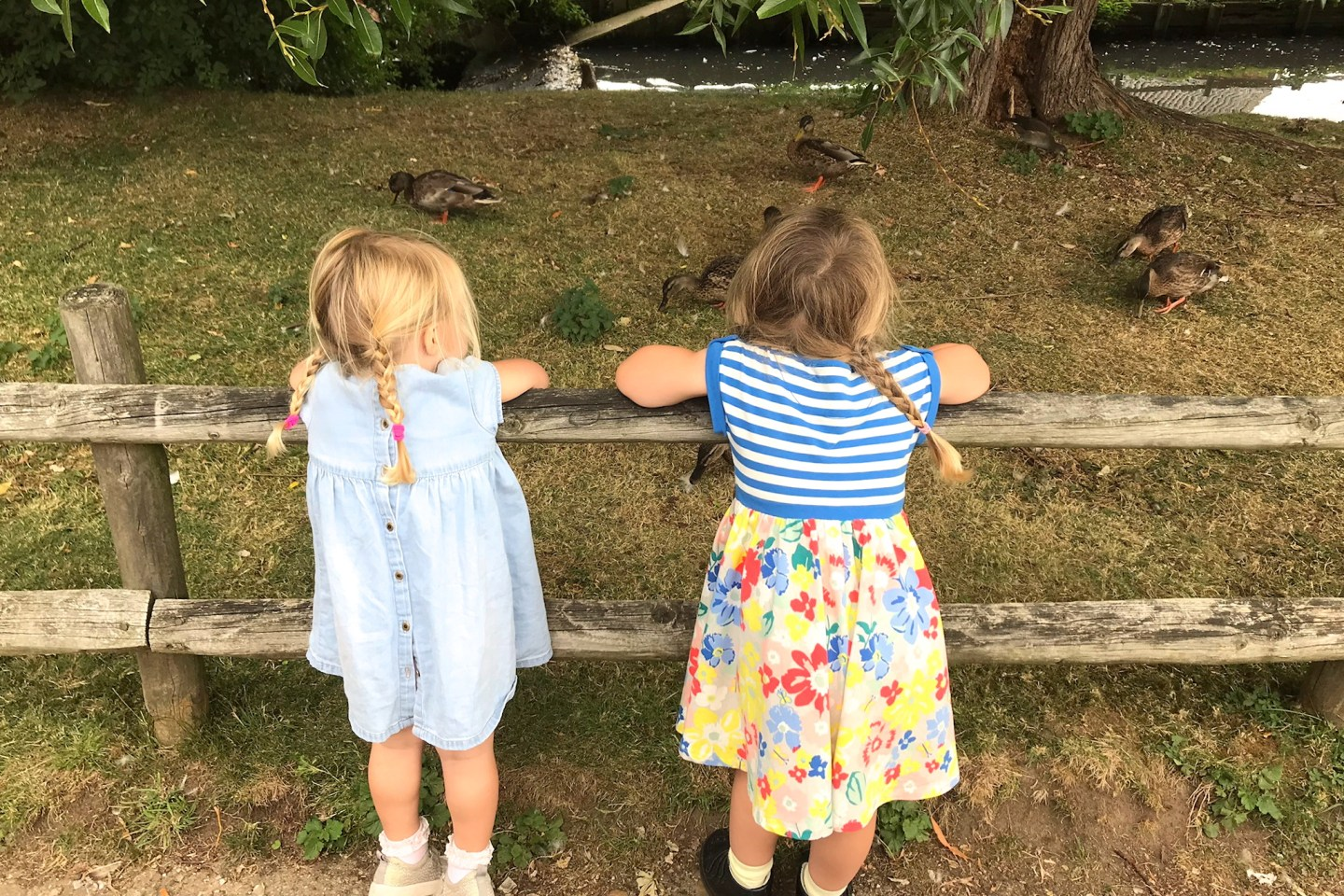 Two sisters from behind, leaning on a fence, looking at ducks
