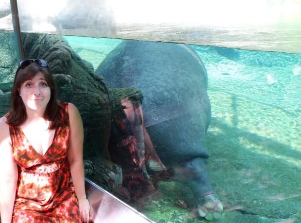 bad hippo